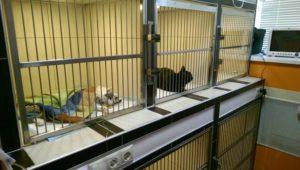 операция стерилизация кастракия кошки коты одинцово
