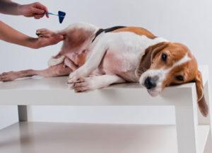 Ветеринарный невролог