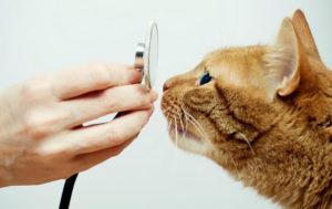 Ветеринарный врач в Одинцово