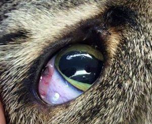 Поражения глаз, вызванные растениями